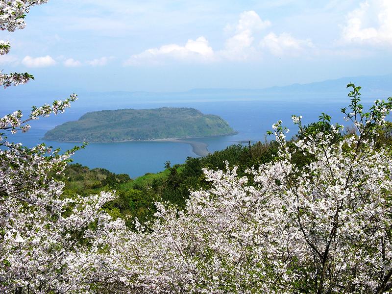 桜_8-05九州_魚見岳