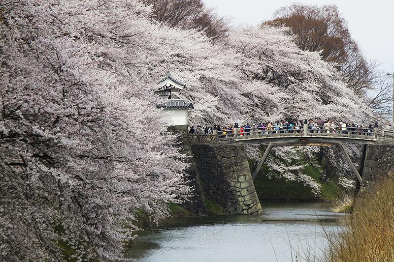桜_2-04山形県提供_山形城霞城公園