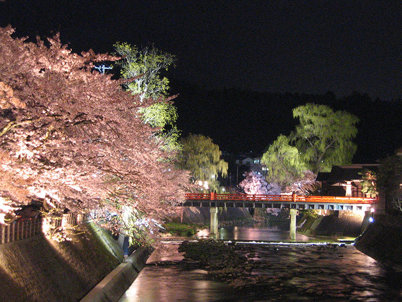 桜_4-02高山市提供_飛騨高山橋
