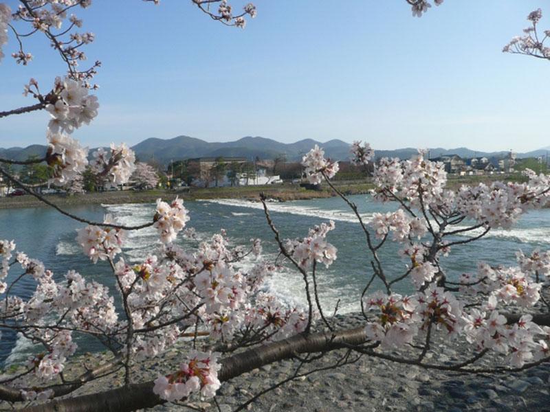 桜_5-02_嵐山s
